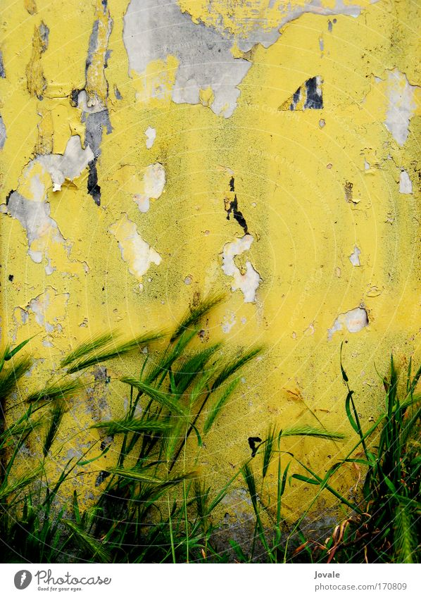 Nature Old Plant Green Yellow Wall (building) Grass Wall (barrier) Gray Stone Moody Sand Facade Growth Authentic Wind