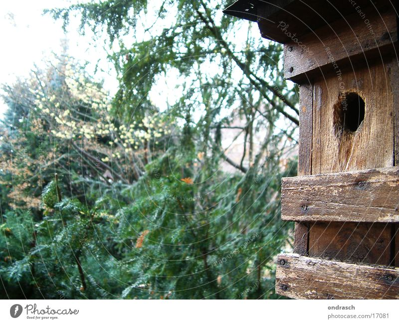 House (Residential Structure) Forest Bird Nest Bird's eggs
