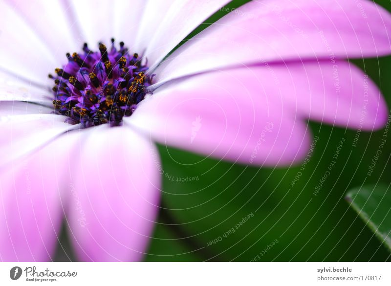 Nature Beautiful White Flower Green Plant Summer Blossom Pink Environment Soft Violet Natural Blossoming Fragrance Pollen