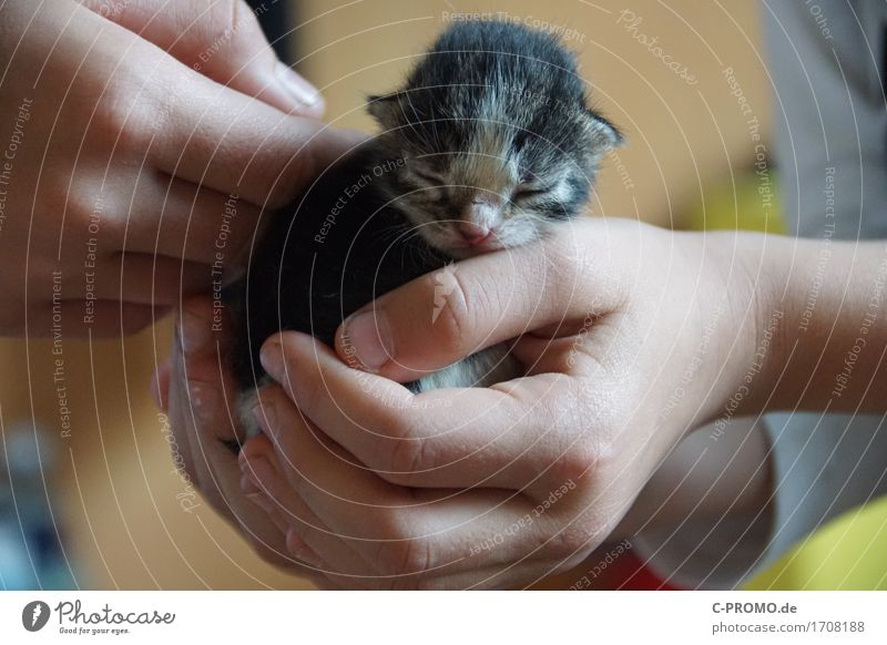 cat baby Child Hand 2 Human being Animal Pet Cat 1 Sleep Painting (action, work) Small Contentment Protection Safety (feeling of) Love of animals Considerate