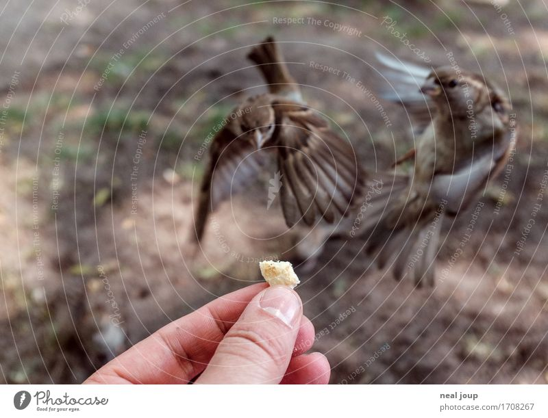 Delicious food - I Bread Fast food Hand Fingers Bird Sparrow 2 Animal Flying To feed Feeding Hunting Elegant Brash Astute Speed Brown Success Brave Voracious