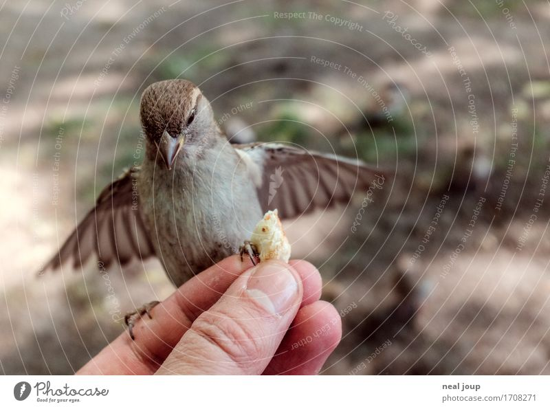 Delicious food - II Bread Fast food Hand Fingers Bird Sparrow 1 Animal Flying To feed Feeding Crouch Elegant Brash Astute Speed Brown Success Brave Voracious