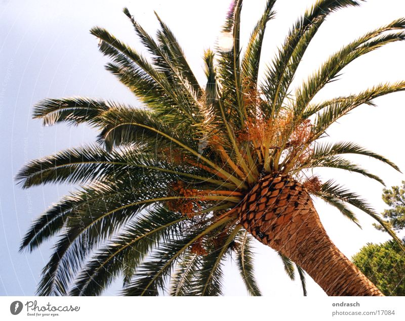 Under palm trees Palm tree Tree Beach South Physics Ocean Sun Warmth Mediterranean sea