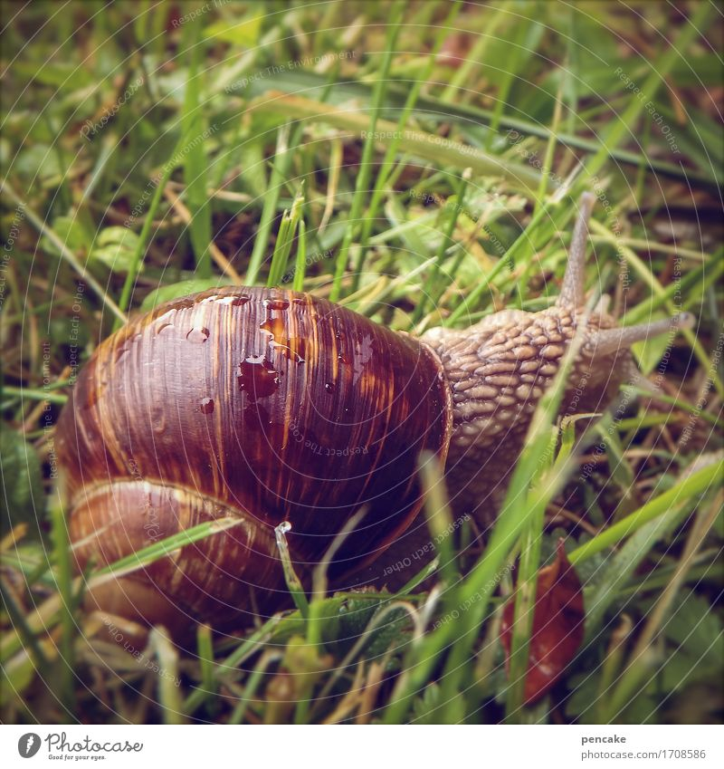 happy vineyard Nature Elements Earth Water Garden Meadow Animal Snail 1 Fresh Near Slimy Warmth Feminine Brown Green Living or residing Vineyard snail Close-up