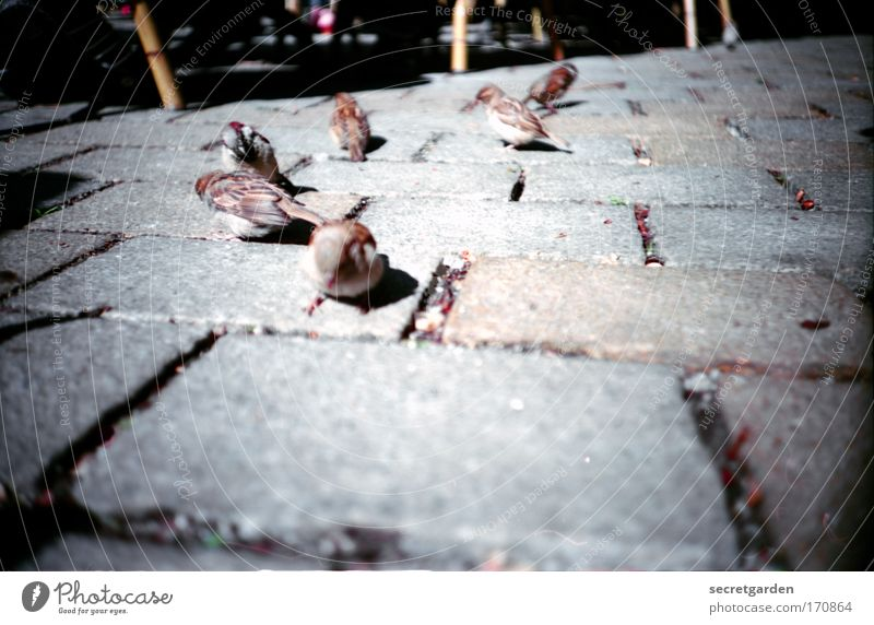 sparrows on the Hackescher market. (surrounded by spiders) Colour photo Subdued colour Exterior shot Close-up Lomography Holga Deserted Copy Space right