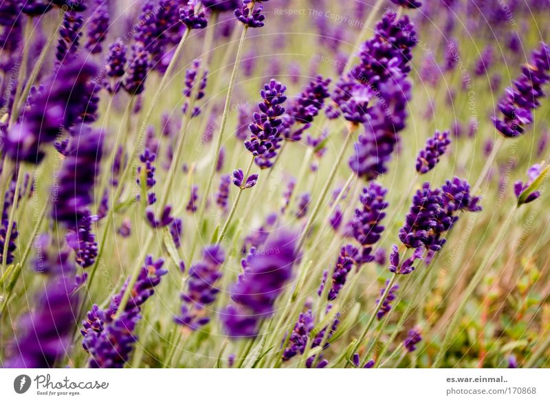 Nature Beautiful Plant Summer Flower Calm Environment Meadow Movement Grass Blossom Park Healthy Dance Growth Violet