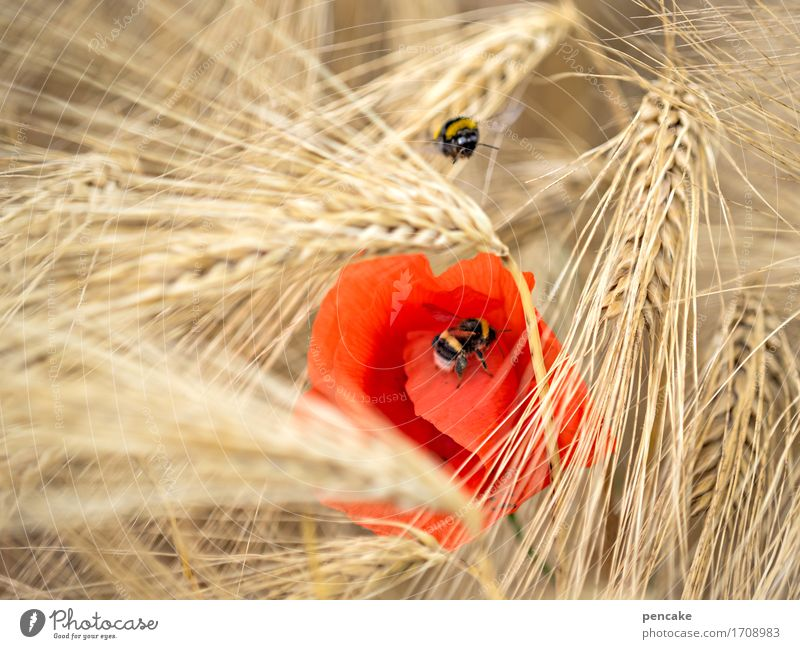 Nature Summer Red Animal Yellow Movement Healthy Dream Field Nutrition Idyll Energy Culture Beautiful weather Relationship Bee