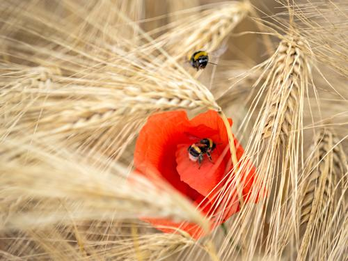 no two days are the same Nature Summer Beautiful weather Agricultural crop Field Animal 2 Movement Relationship Energy Healthy Idyll Culture Senses Dream