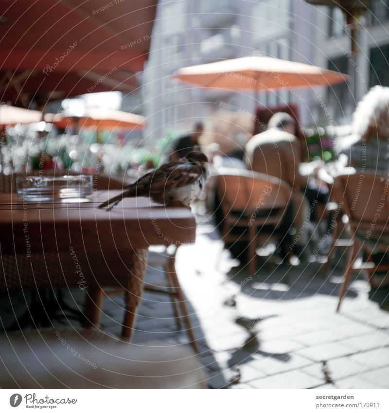 Human being Beautiful City Summer Vacation & Travel Loneliness Animal Wood Happy Lomography Bird Small Sit Table Perspective Observe