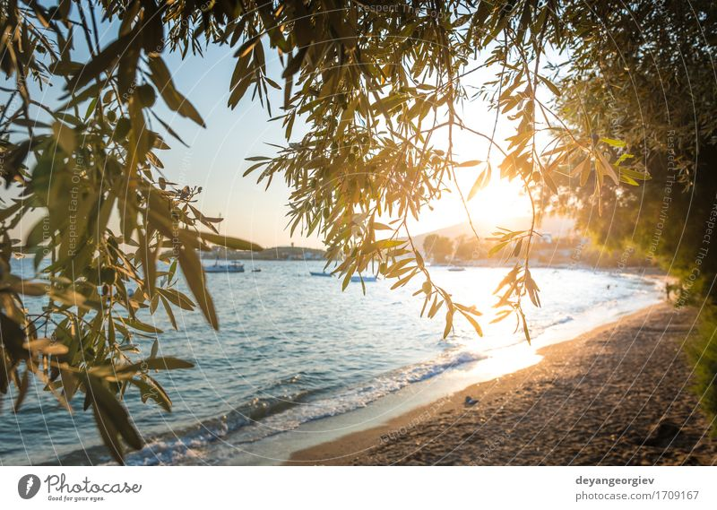 Olive trees, sea and sunset. Beautiful Vacation & Travel Tourism Summer Sun Beach Ocean Island Mountain Garden Nature Landscape Sky Tree Blue olive Sunset