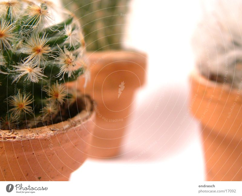 cactuses =)) Cactus Succulent plants Plant Dry Chamber pot Room Window Thorn peaks Desert
