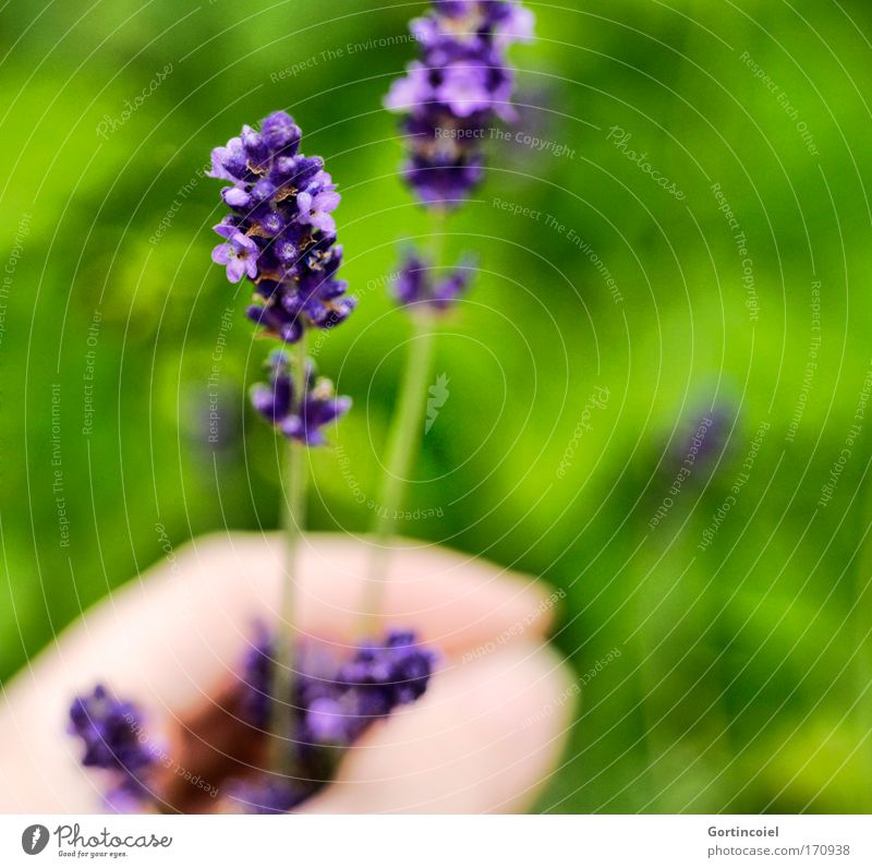 in the garden Colour photo Exterior shot Close-up Detail Day Shallow depth of field Human being Hand Fingers Environment Nature Plant Spring Summer Flower