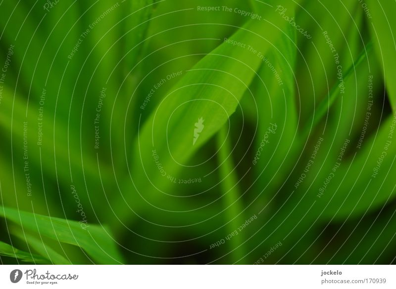 Green is hell Environment Nature Plant Animal Grass Bushes Meadow Juicy Black Colour photo Exterior shot Close-up Detail Macro (Extreme close-up) Pattern