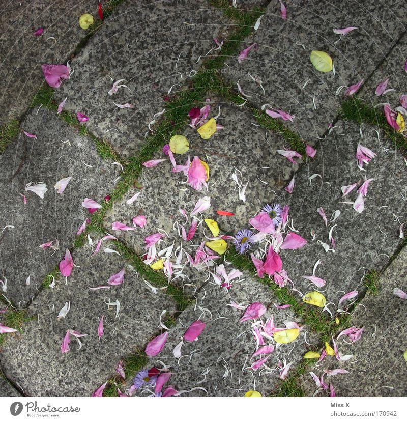 wedding Flower Blossom Lanes & trails Multicoloured Paving stone Blossom leave Distribute Cobblestones Exterior shot Deserted Bird's-eye view