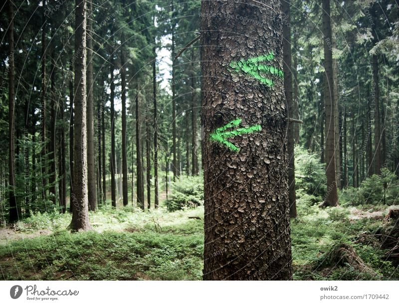 Nature Vacation & Travel Plant Green Tree Landscape Forest Environment Freedom Tourism Leisure and hobbies Hiking Idyll Simple Sign Adventure