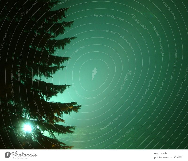 Tree Green Lighting Fog Creepy Fir tree Illuminate Mystic Photographic technology