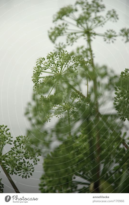 Nature White Green Plant Summer Environment Meadow Gray Blossom Park Field Fog Wild Natural Fresh Esthetic