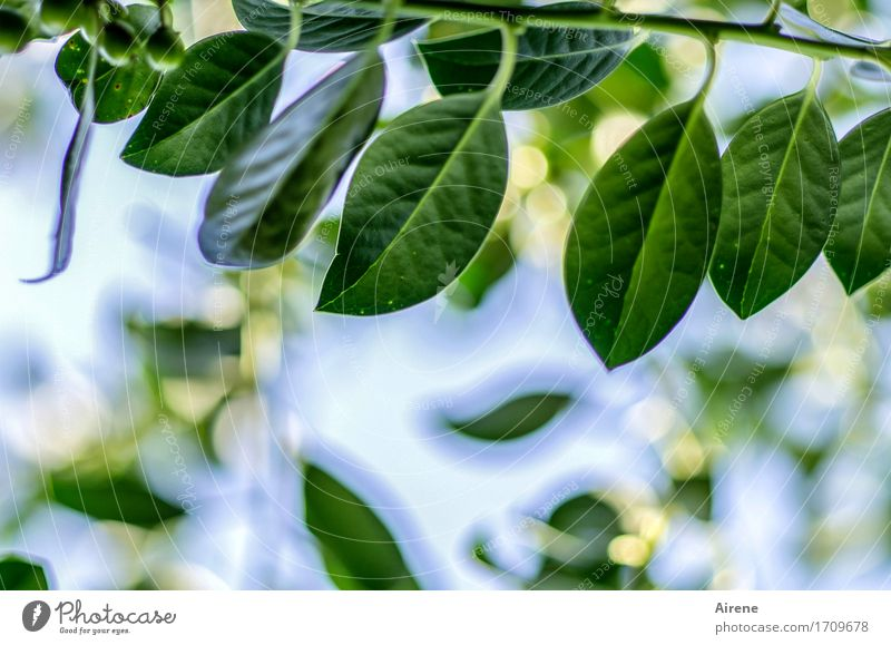 criminal Plant Beautiful weather Tree Leaf Foliage plant Exotic Holly Garden Virgin forest Poison Growth Blue Green Pierce Dangerous Thorny Evergreen plants