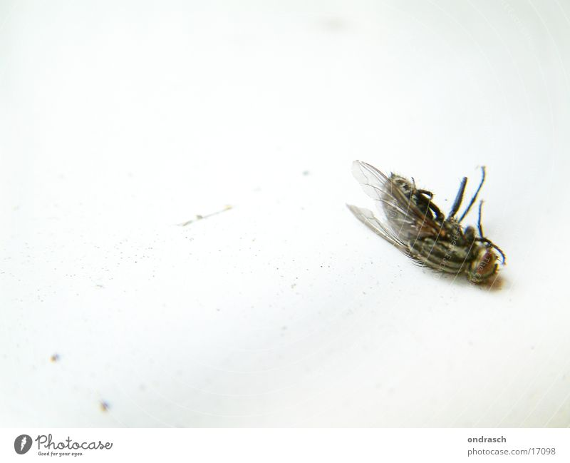 Puck's dead. Fly Insect Calm Nutrition Flat (apartment) buzzes Brakes Death Disturbed Agitated Food