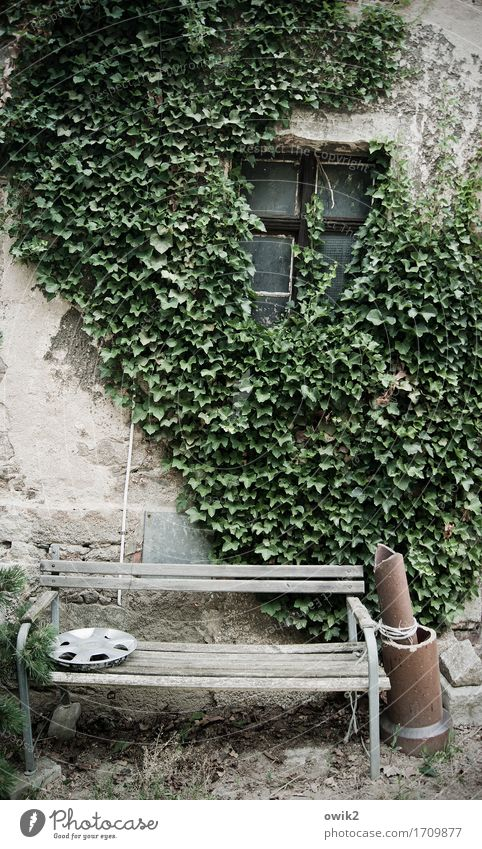 Old Relaxation Calm Window Wall (building) Wall (barrier) Together Facade Contentment Idyll Bench Still Life Peaceful Ivy Downspout Wheel cover