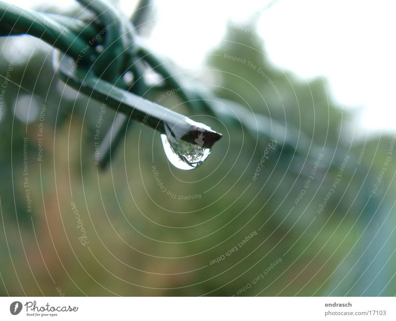rainy day Fence Barbed wire Border Green Captured Grief Converse Wire Iron Drops of water Rain Water Point Barrier