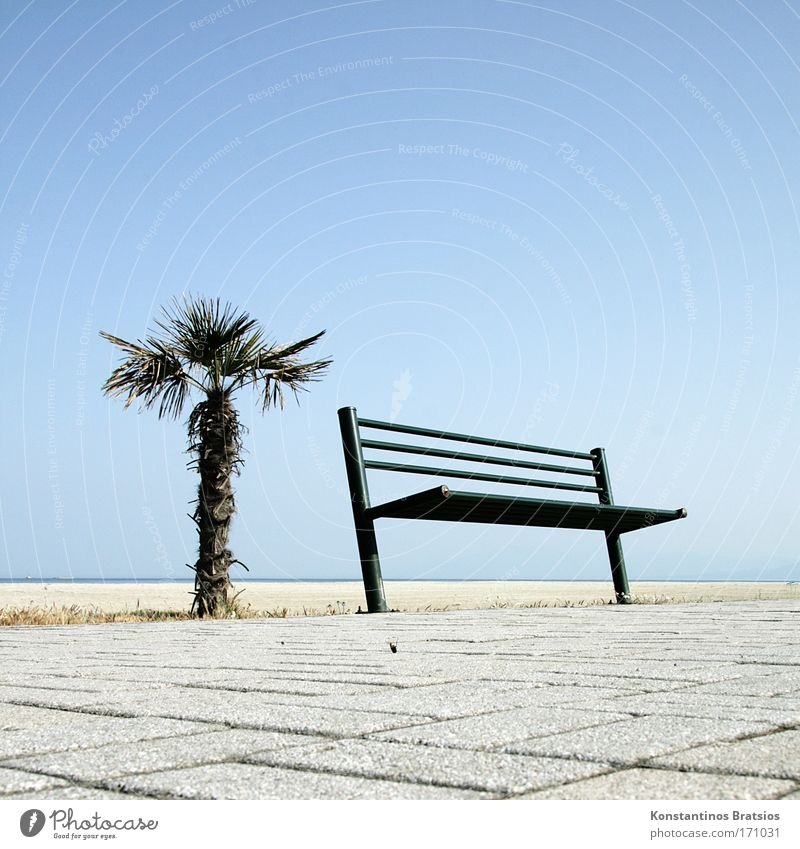 A place in the sun Colour photo Exterior shot Deserted Copy Space right Copy Space top Copy Space bottom Neutral Background Day Sunlight Worm's-eye view