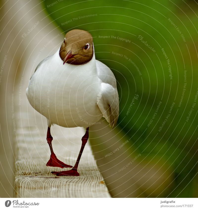 Nature White Green Animal Brown Bird Hiking Going To go for a walk Wild animal Cute Seagull Black-headed gull