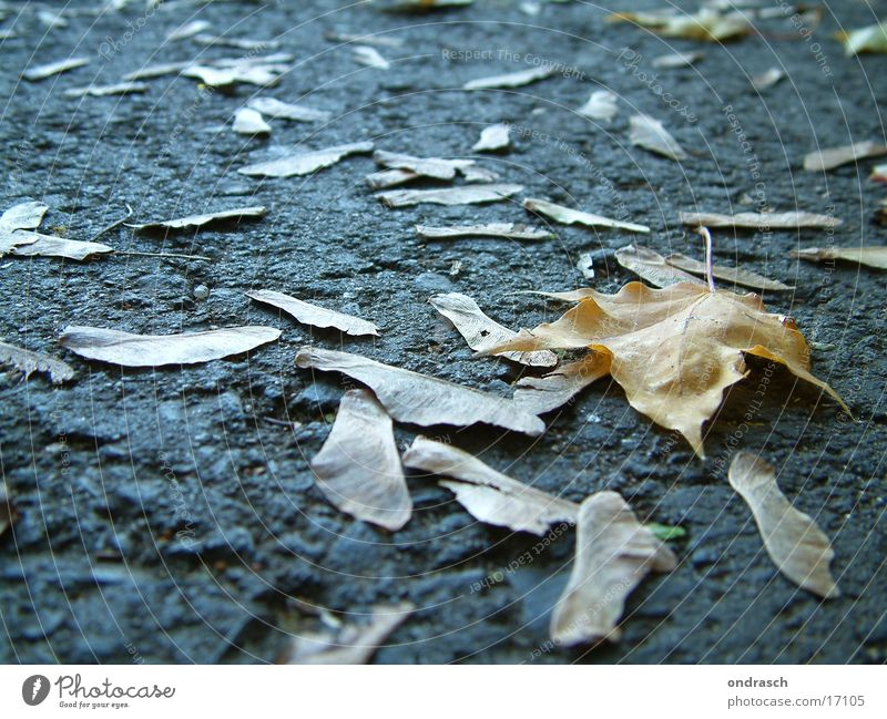 Tree Leaf Street Autumn Lanes & trails Nose Lie To fall Seed Maple tree Sowing Oak tree Birch tree