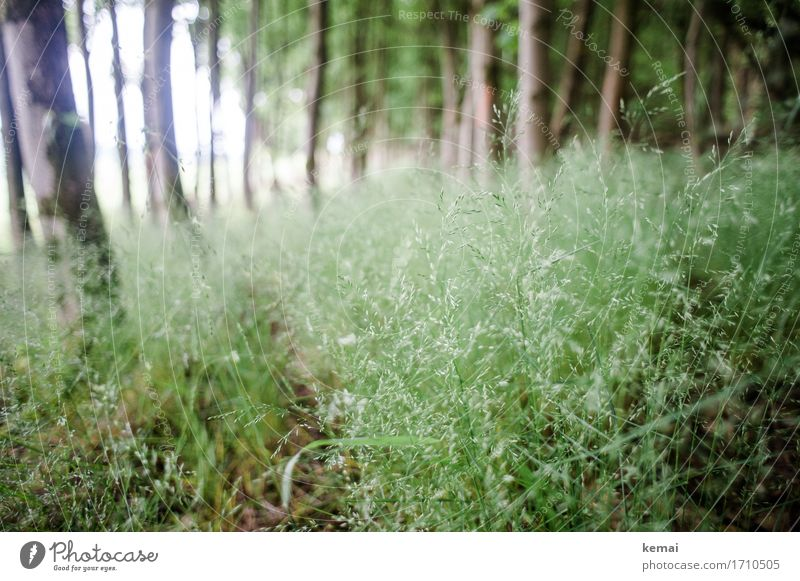 AST9 | Where the ticks are Freedom Nature Plant Summer Tree Grass Foliage plant Forest Fresh Green Undergrowth Grass blossom Many Colour photo Subdued colour