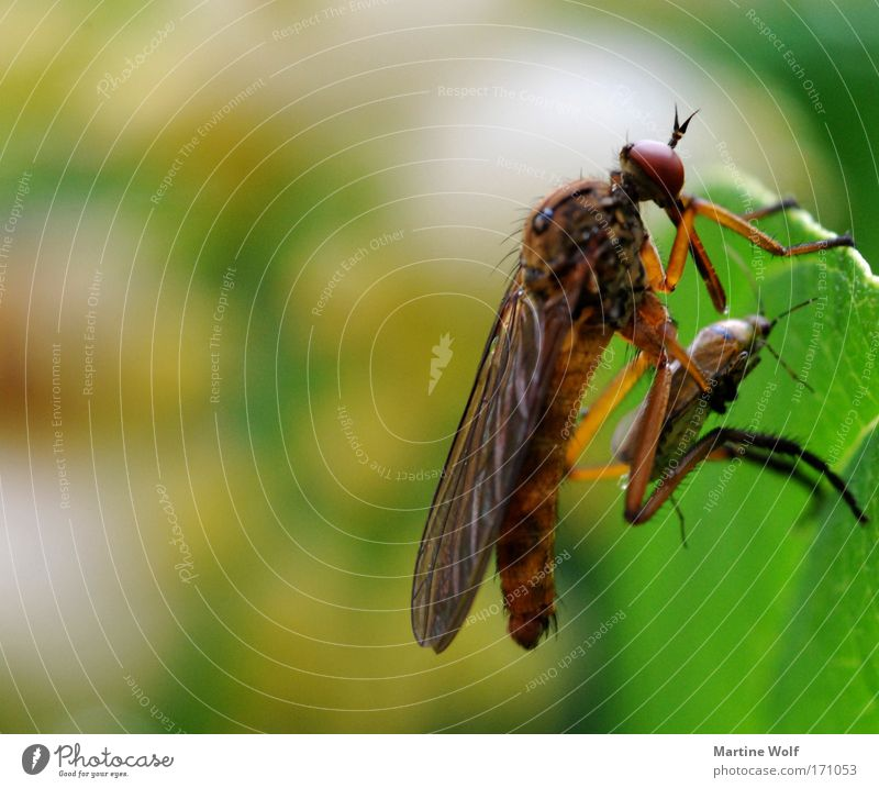 Nature Green Animal Leaf Death Transience Might Insect Creepy Catch Hunting To feed Beetle