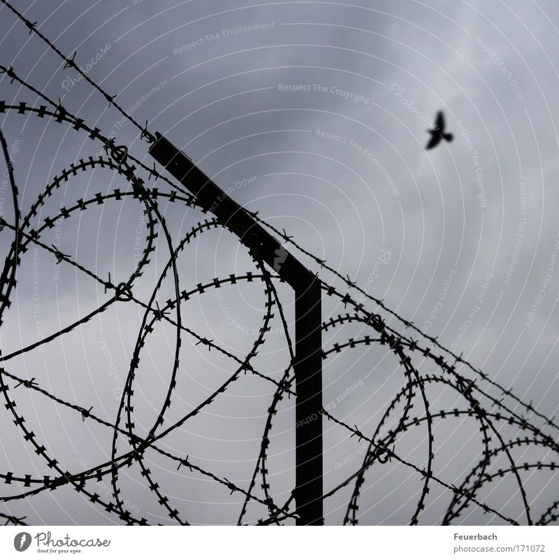 Flight to freedom? Freedom Sky Clouds Wall (barrier) Wall (building) Bird 1 Animal Threat Infinity Thorny Longing Force War Rescue Divide Escape Flying Border