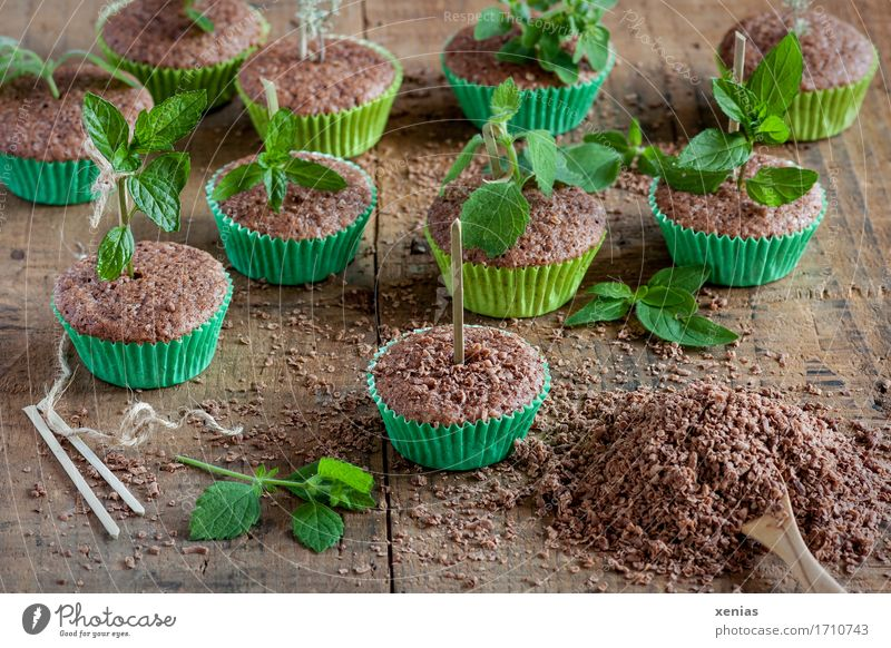 chocolate cake in green muffin tins with lemon balm as arranged in the nursery Chocolate cake Muffin Lemon Balm Dough Baked goods Cake Candy Herbs and spices