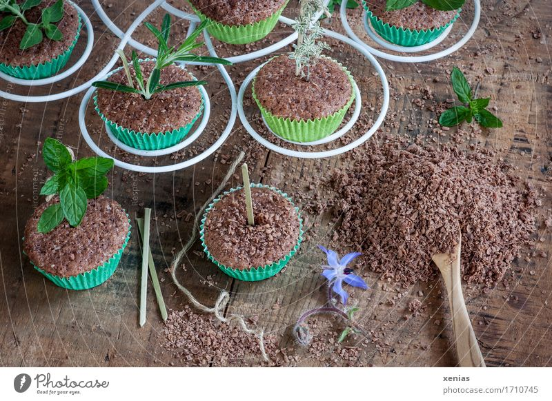 Chocolate muffins with herbs on wooden base Chocolate cake Muffin Cake Candy Herbs and spices Sugar Spoon Etagere Feasts & Celebrations Thyme Mint Rosemary