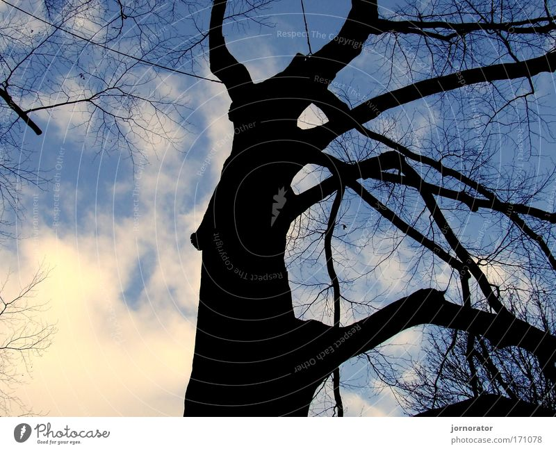 Shadow tree outlines Day Nature Winter Tree Unwavering Dark side Hope