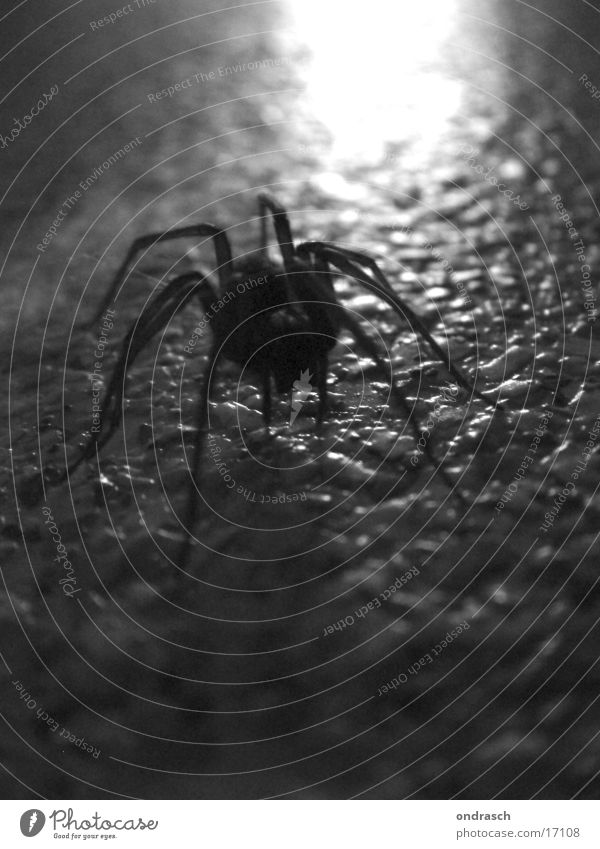 Spider in the evening Animal Insect Creepy Disgust Dark Crawl Fear Silhouette Black & white photo