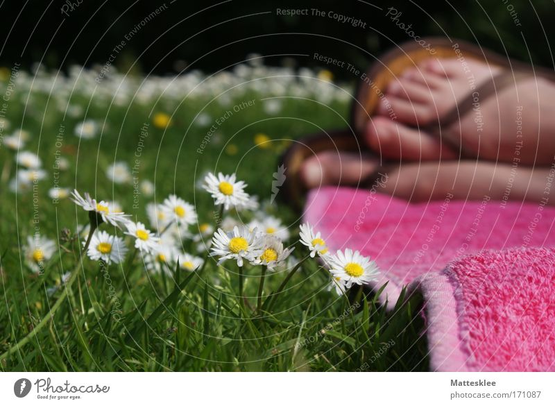 Human being Woman Sun Summer Calm Adults Relaxation Life Freedom Garden Moody Feet Healthy Contentment Natural Lifestyle