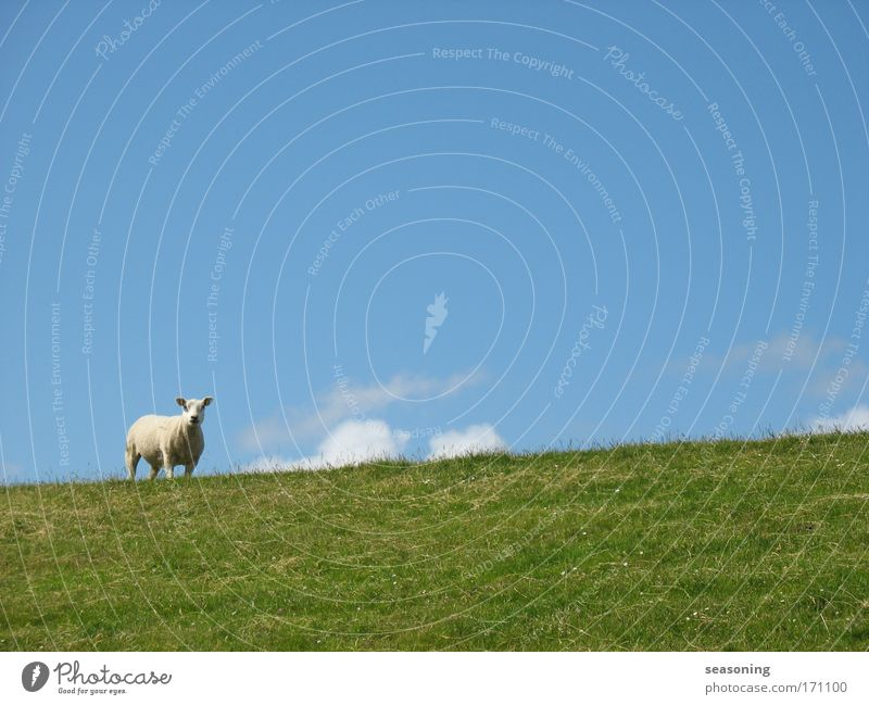 Nature Beautiful Sky White Green Blue Calm Clouds Animal Far-off places Meadow Emotions Grass Happy Contentment Moody