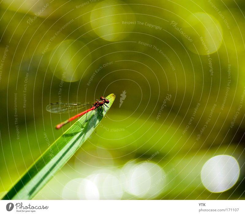 Green Plant Animal Life Moody Wait Glittering Flying Safety Break Soft Wing Wild Point Illuminate Wild animal