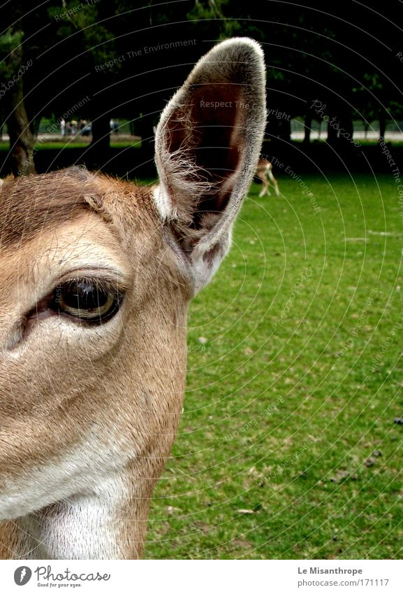 Nature White Green Tree Animal Eyes Meadow Environment Grass Brown Germany Trip Esthetic Might Wild animal Animal face