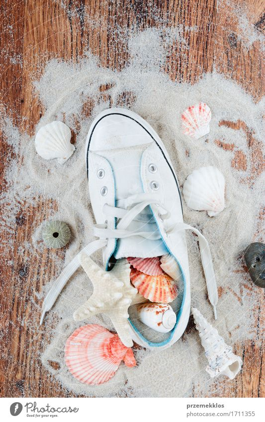 Treasures from a beach Vacation & Travel Summer Ocean Wood Sand Brown Copy Space Footwear Summer vacation Vertical Sneakers Shell Souvenir