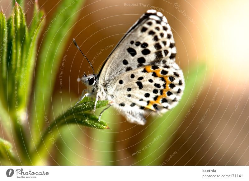 Nature White Beautiful Plant Summer Animal Relaxation Environment Meadow Movement Grass Moody Contentment Power Flying Elegant