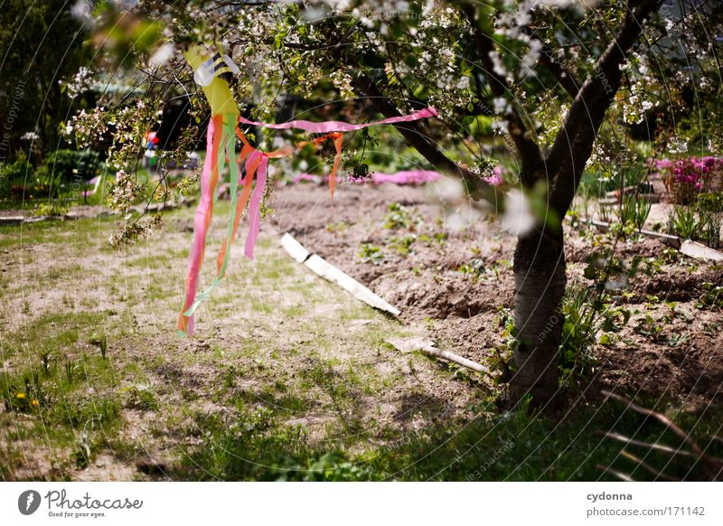Nature Tree Plant Calm Loneliness Life Meadow Emotions Blossom Movement Spring Garden Freedom Happy Dream Sadness