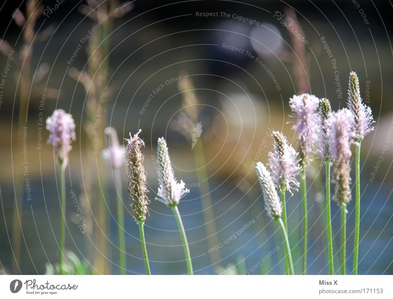 Nature Plant Meadow Blossom Grass Park Field Healthy Environment Growth Close-up Environmental protection Biological