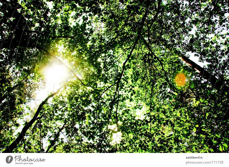 summer Nature Trip Tree Leaf Brandenburg Briesetal Relaxation Green To go for a walk Plant Forest Worm's-eye view Sun Roof Deciduous forest Mixed forest Oxygen