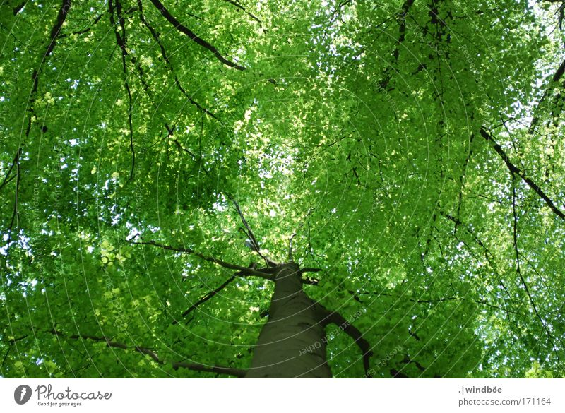 leaf canopy Colour photo Exterior shot Deserted Day Worm's-eye view Upward Environment Nature Air Spring Beautiful weather Tree Leaf Foliage plant Forest