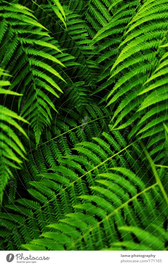 tropical curtain (jungle) Fern Feng Shui Virgin forest jungles Palm tree green Colour photo Exterior shot Close-up Detail Macro (Extreme close-up)
