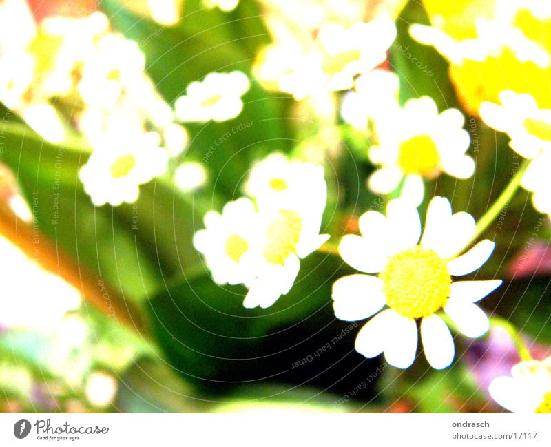 xtrem_flower_crossing Flower Light Yellow Summer Spring Jump Photographic technology Garden