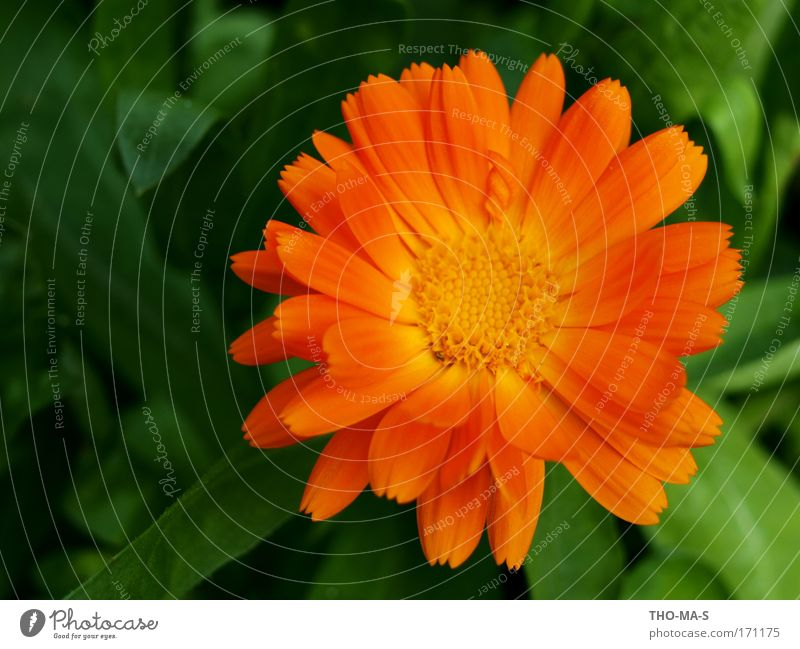 Nature Green Beautiful Plant Sun Summer Flower Joy Leaf Colour Environment Life Garden Blossom Park Orange