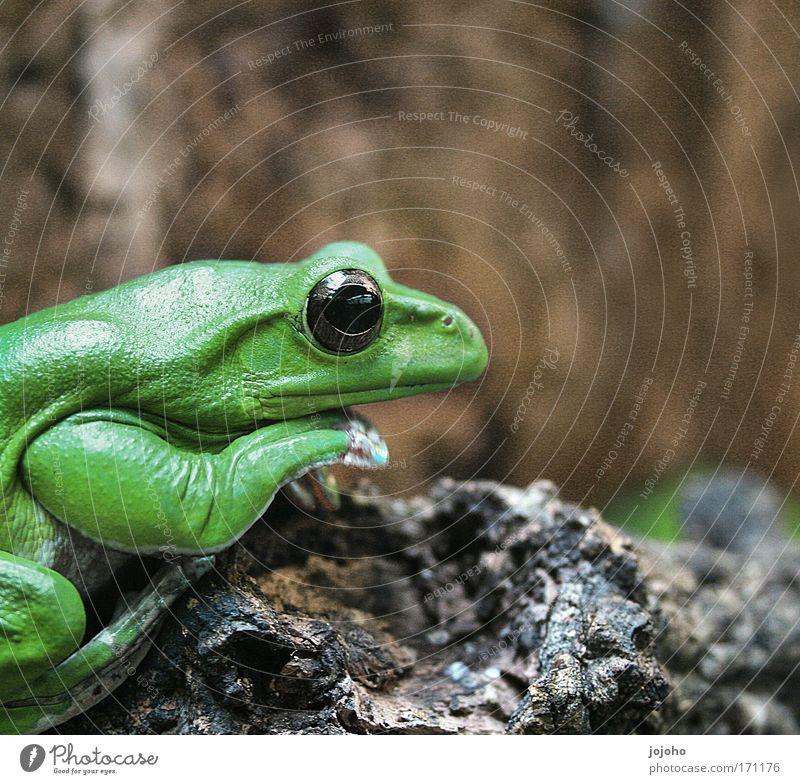 Green Joy Calm Loneliness Animal Happy Power Crazy Sit Esthetic Serene Boredom Frog Smart Pride Caution
