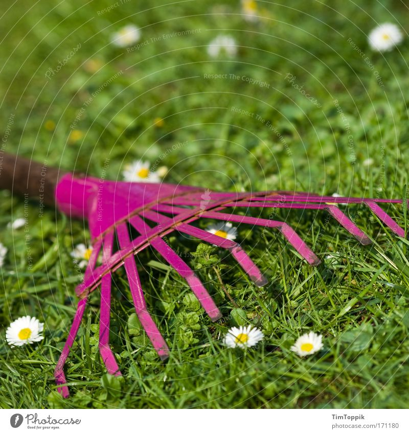 Show what a rake is Plant Flower Grass Foliage plant Rake Horticulture Gardening Daisy Meadow Work and employment Kitsch Summer Sunlight Sunbeam Spring